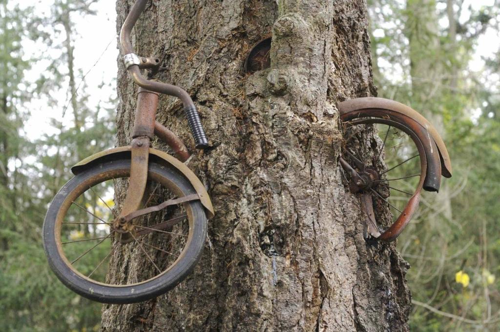 Пенсионер эротоман и мертвый велосипедист