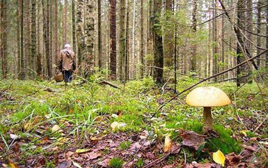Не ходите, девушки, в лес без компаса.