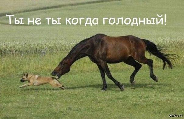 Архангельская продовольственная опасность