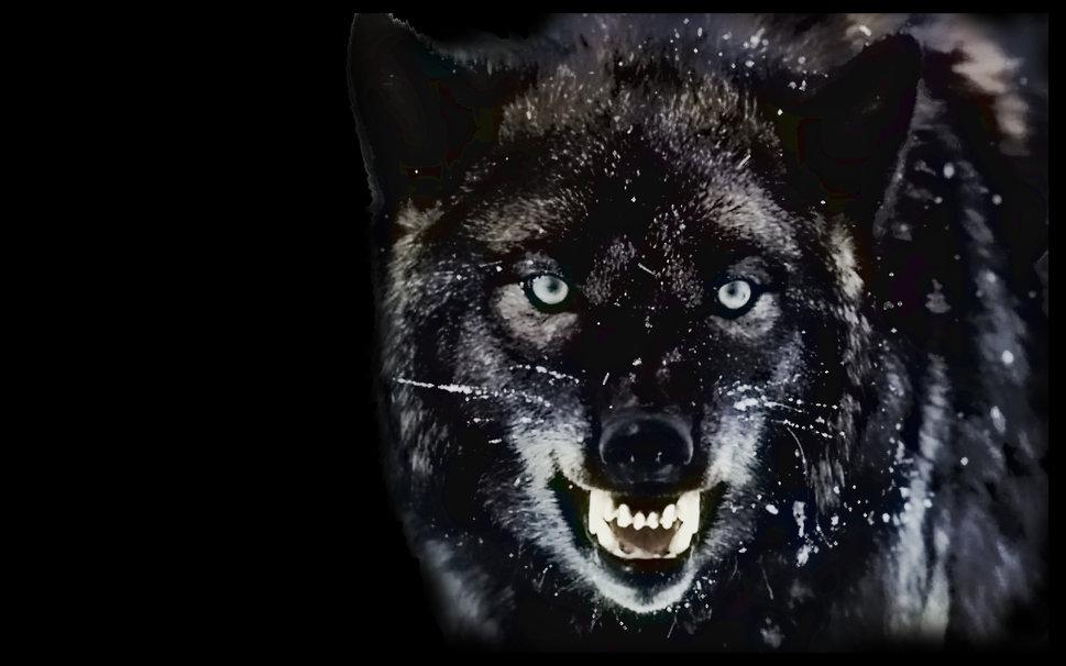 Власти прокомментировали ситуацию с волками