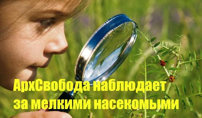 Архангельск. Пиар афера с телевидением ПС