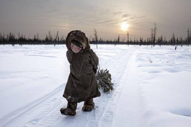 НАО. У ненцев отнимают оленей и пастбища!