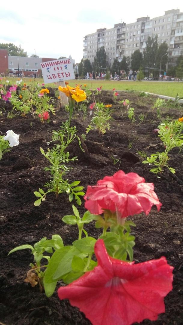 В парке «Зарусье» горожане высадили 800 цветов