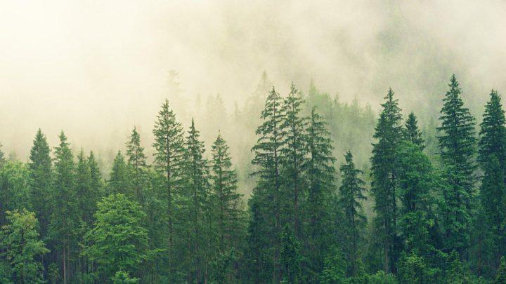 Целый месяц мужчина плутал в лесу и выжил