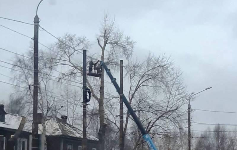 В Архангельске окультуривают тополя