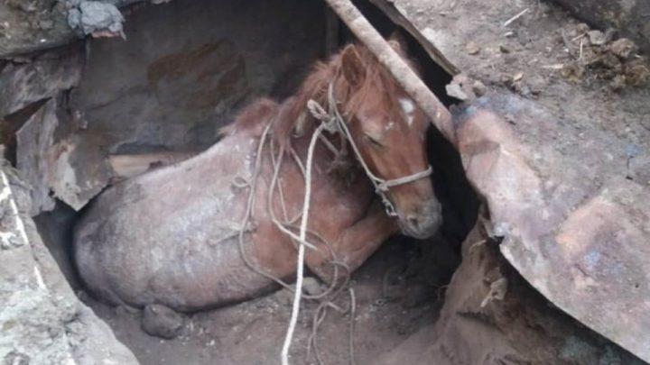 Добрая новость. Спасатели вытащили провалившуюся лошадь.